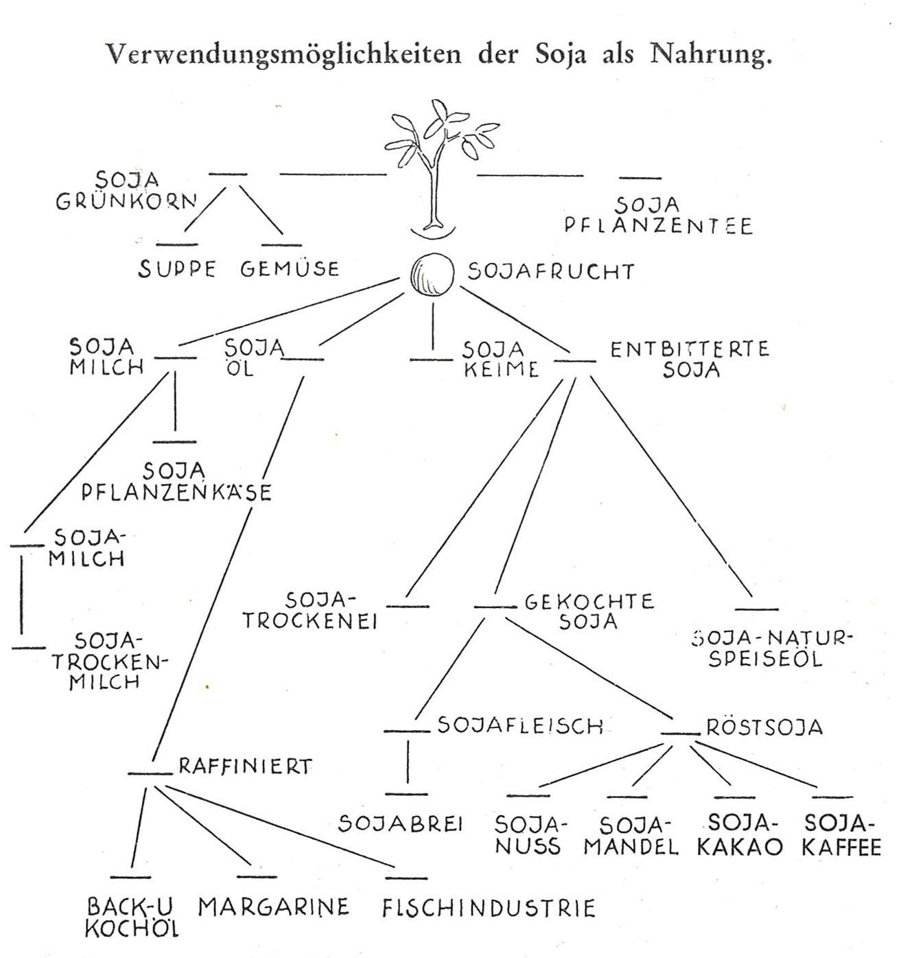 Das Bild zeigt eine historische Grafik, in der verschiedene Soja-Erzeugnisse in einem Astdiagramm miteinander in Beziehung gesetzt werden. Zum Beispiel ist Sojamilch mit Sojapflanzenkäse verknüpft und dann wieder Sojamilch und Sojatrockenmilch. Die Produkte reichen bis hin zu Sojafleisch und Sojakaffee.