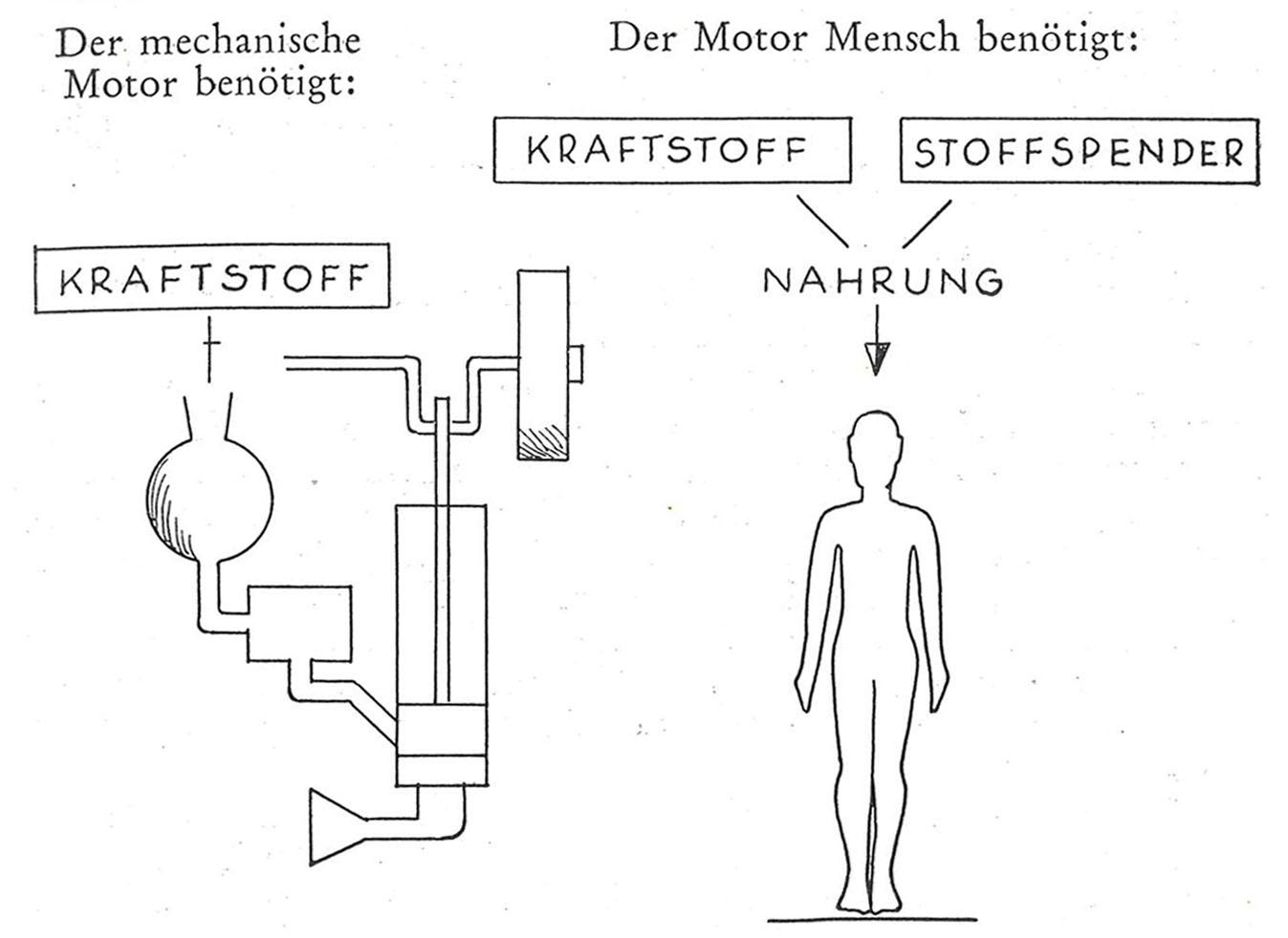 """Die Illustration zeigt einen mechanischen Motor und einen Menschen. Mit Textelementen wird erläutert: Der mechanische Motor benötigt """"Kraftstoff"""" und der Mensch benötigt """"Kraftstoff"""" und """"Stoffspender"""", die als """"Nahrung"""" zusammengefasst sind."""