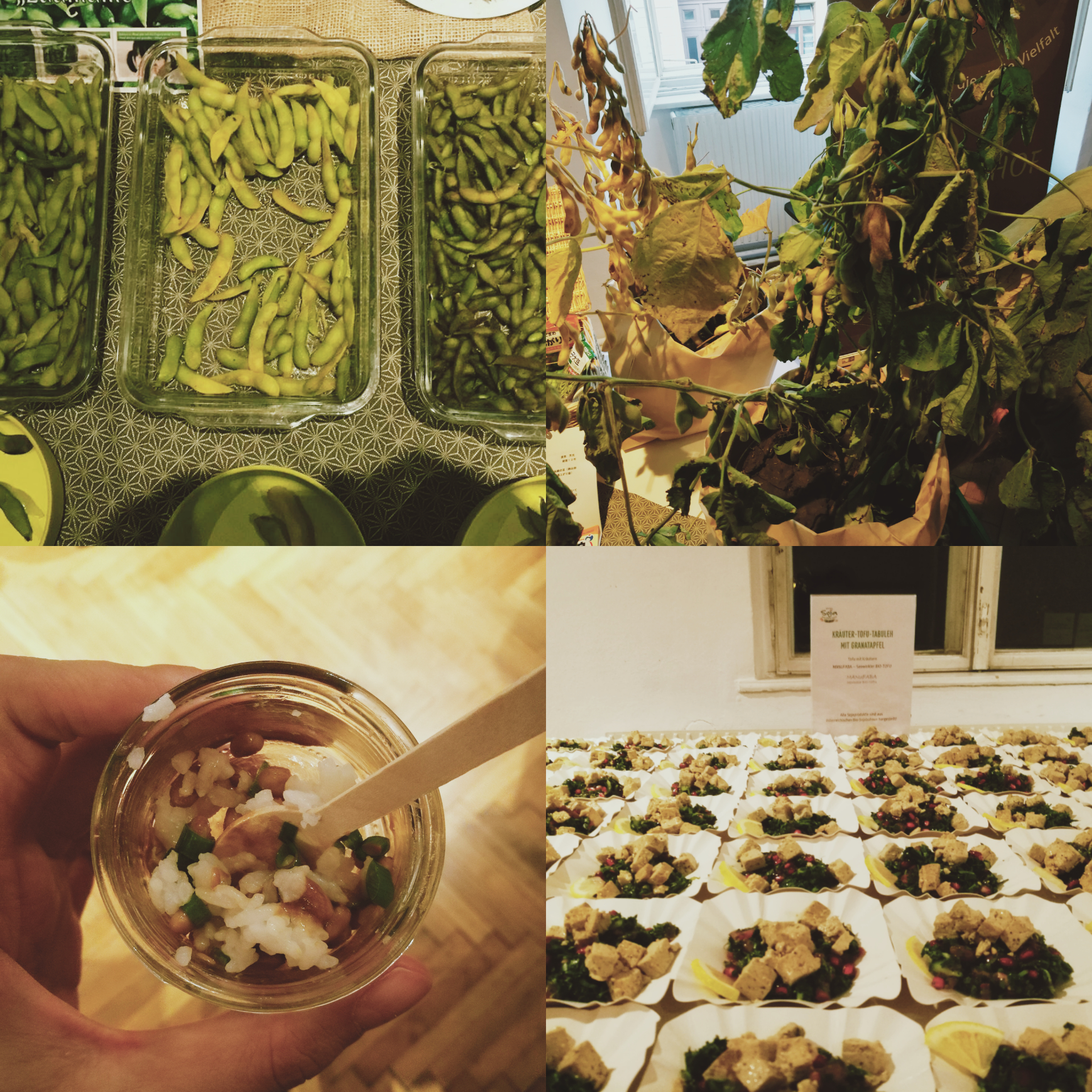 Die Abbildung ist eine Collage aus vier Fotos. Das erste zeigt Schalen mit Sojabohnen in ihren Hülsen, das zweite verschiedene grüne Blätter. Die restlichen beiden Fotos zeigen portionierte Sojagerichte.